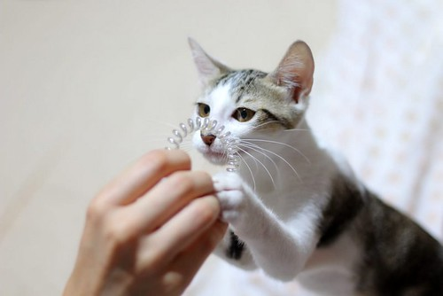 Sento, gatito blanquipardo dulcísimo y guapo nacido en Abril´18, en adopción. Valencia. ADOPTADO. 42184208620_7fa224500b
