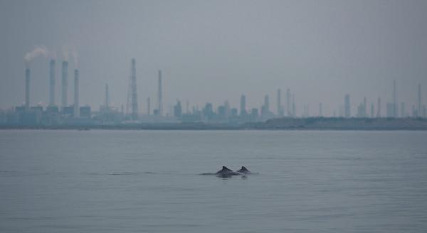 台灣蠻野心足生態協會、台灣媽祖魚保育聯盟就  「台中港外港區擴建計畫開發案(第一期)」一案之共同聲明