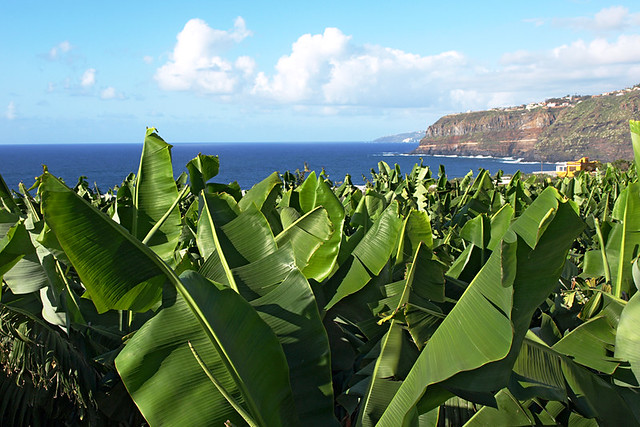 Bananas, La Orotava, Tenerife