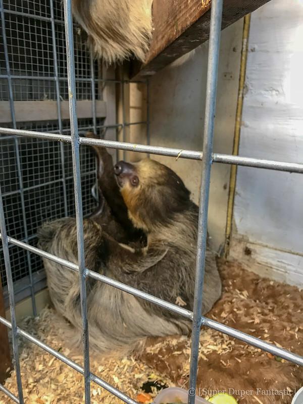 Predators of the Heart - Sloth