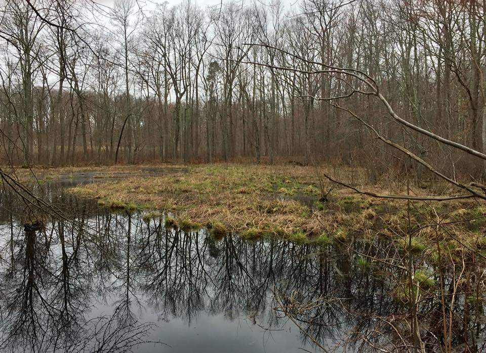 Photo of Monk's Creek