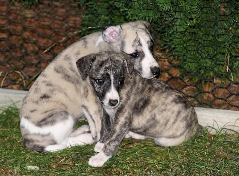 Die beiden Brüder Enzo (der hellere) und Taro (der Erstgeborene)