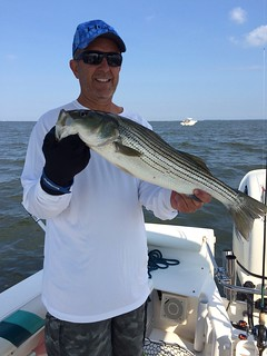 Photo of man holding up a striped bass.