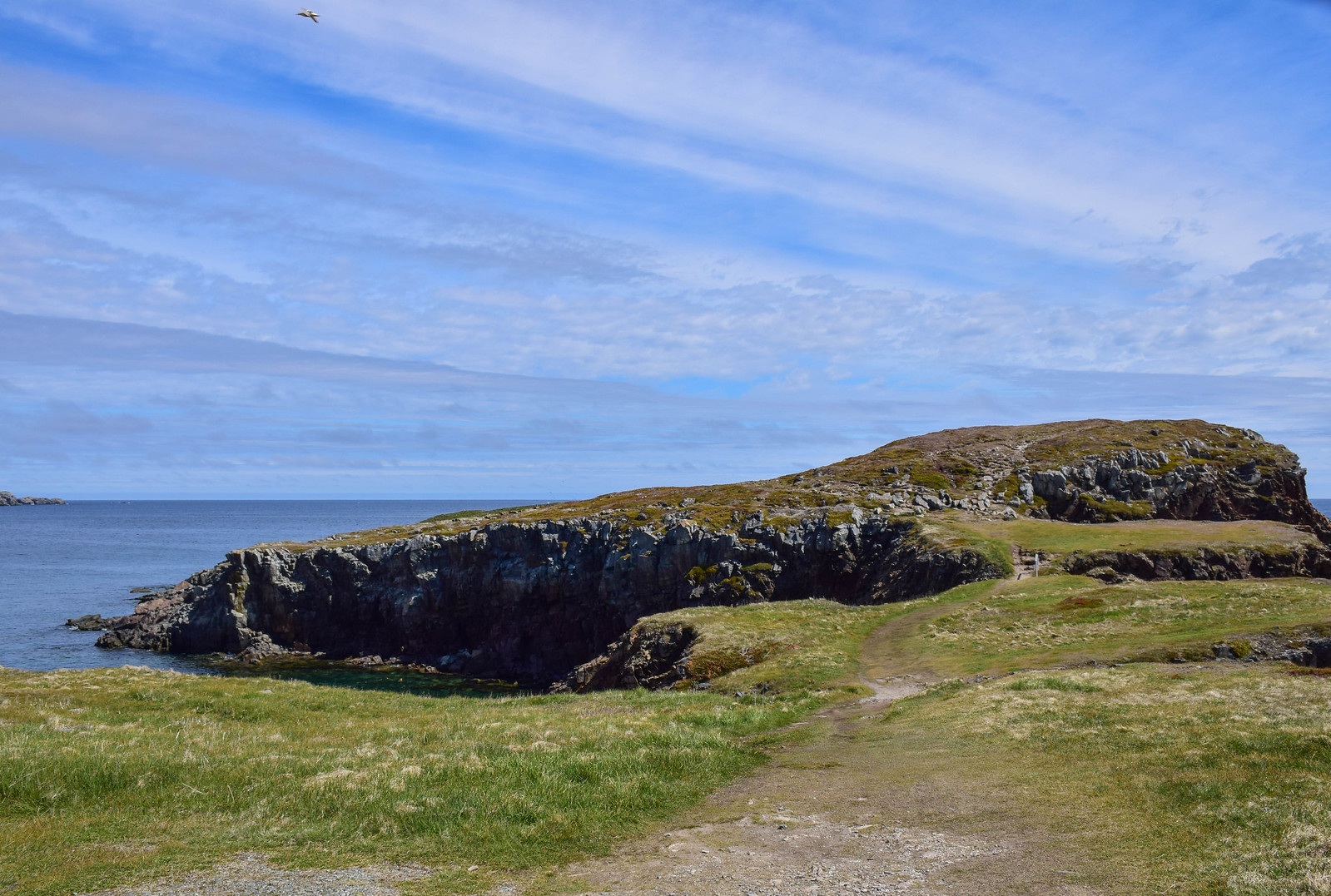 best place to see puffins in Newfoundland
