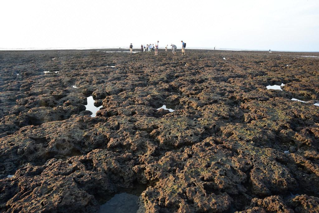 大潭藻礁黑色的礁體。圖片來源:陳昭倫提供。