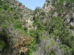 Le canyon de Lora depuis le bas du canyon