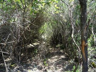 Création du départ du chemin RG du Finicione : la partie dans le sous-bois