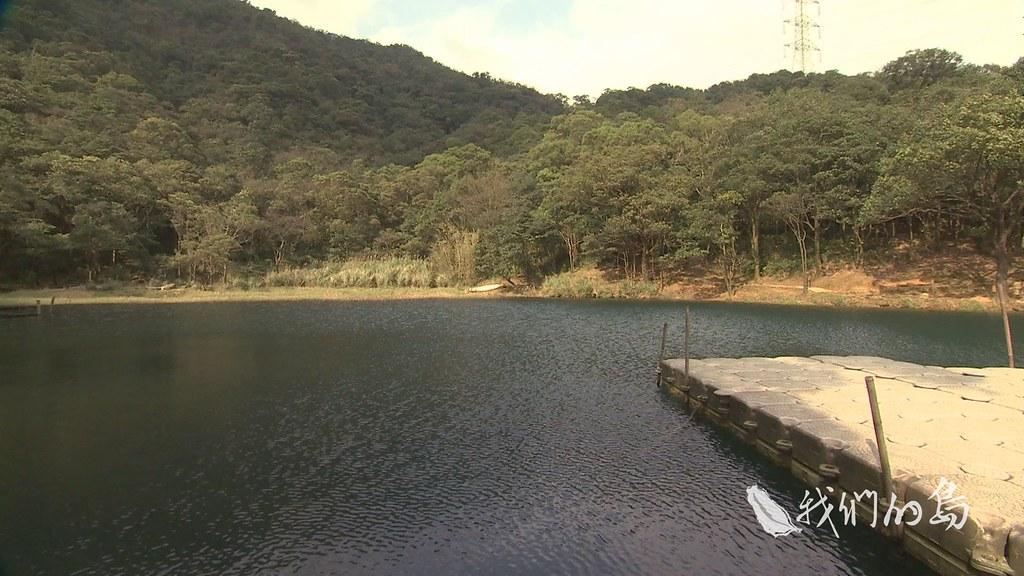962-3-03ss汐止的新山夢湖擁有稀有的黃花狸藻全,是台最大的野生族群。