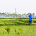 Woman leaning on her hoe in a rice paddy