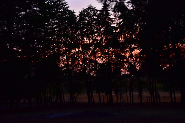Sunset through the pines, Palmela, Portugal