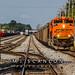 BNSF 9101 | EMD SD70ACe | NS Harris Yard