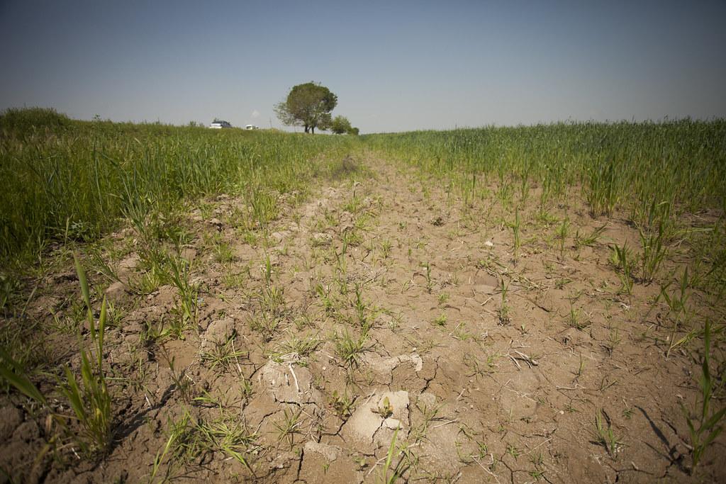 土壤鹽化。Milo Mitchell(CC BY-NC-ND 2.0)