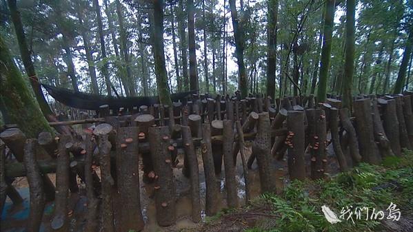 968-1-34s林試所另外也針對不同比例疏伐的林相,進行多樣化栽培的試驗,其中段木香菇需要潮濕的環境。