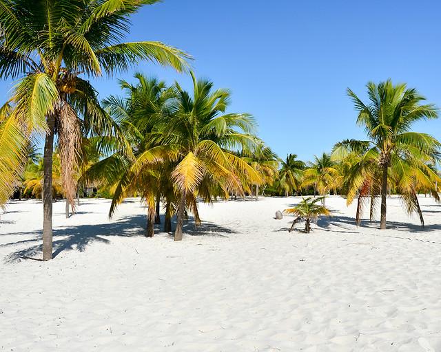 Palmeras de playa Sirena