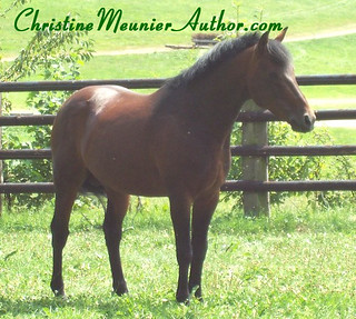 Australian Horse Term: Yard | ChristineMeunierAuthor.com
