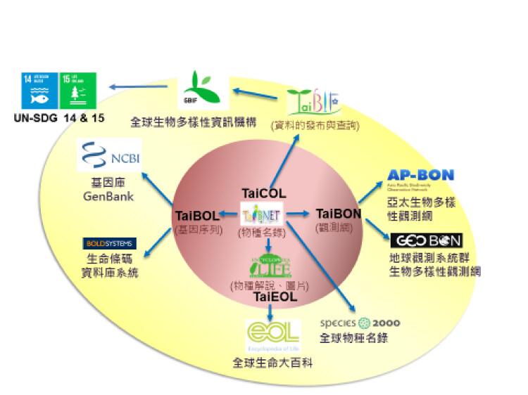 台灣生物多樣性資料庫建置、整合及與國際接軌之架構。2002起台灣陸續建立TaiBNET(TaiCOL)、TaiBIF、TaiBOL、TaiEOL等網站,並予對應的國際組織進行相關合作;2015起建立TaiBON。圖片來源:邵廣昭