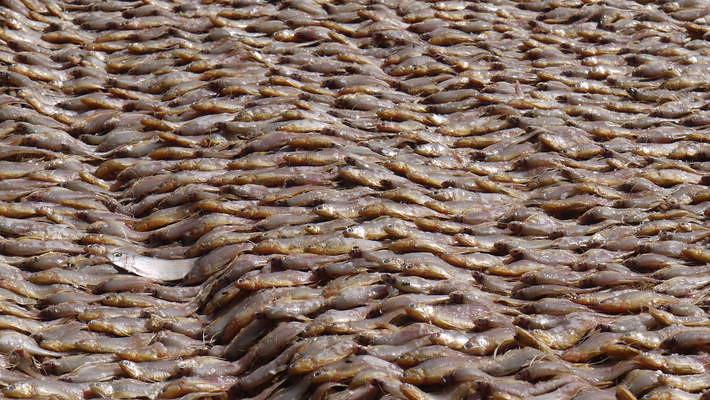 全球有35%的漁獲遭浪費。圖片來源:聯合國。