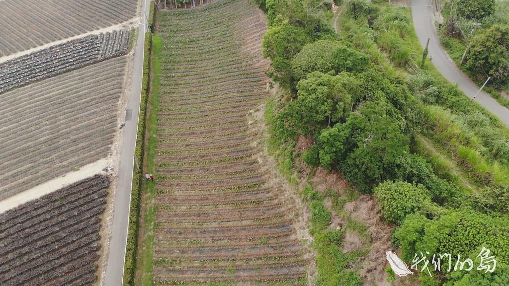 963-2-19s挑戰有機作物、種樹,在田裡導入園藝樹種,建構了一道活生生的綠籬。
