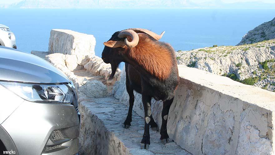 cabo de Fomentor Mallorca