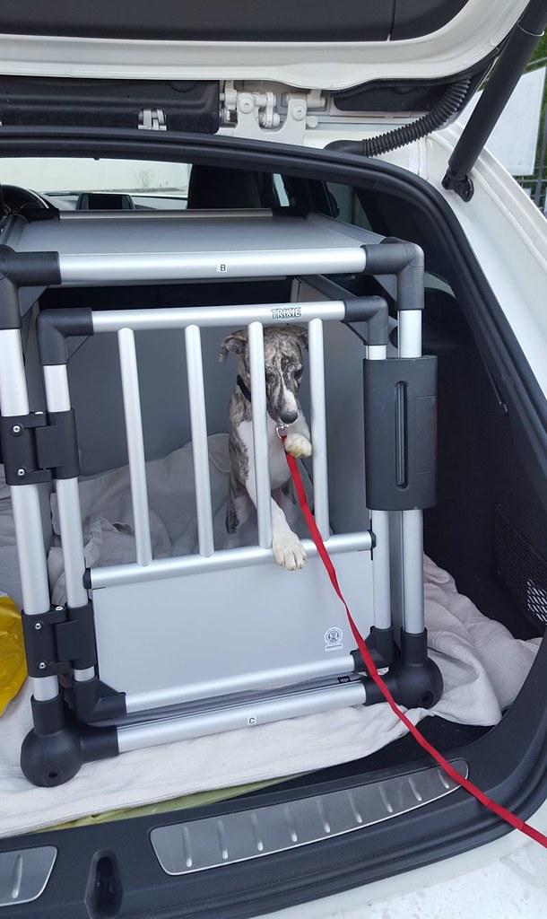 Probesitzen im neuen Käfig im Auto
