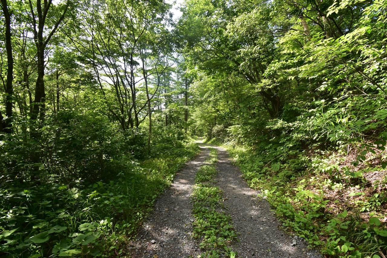 平標山登山口からの林道歩き