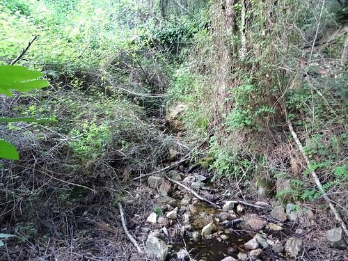 Traversée du ruisseau après la trace dans le roncier