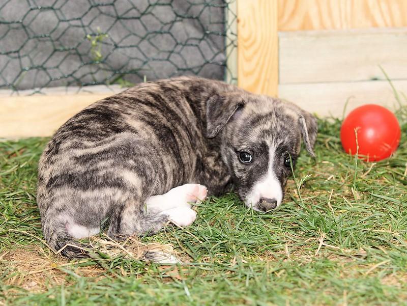 Taro, klein aber als Erstgeborener ohoh!!!