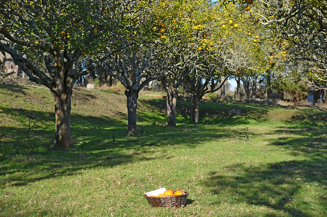 Orchard, Palmela, Portugal