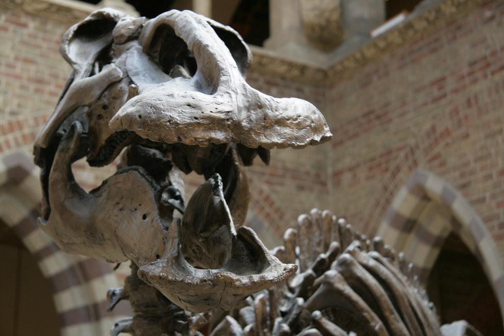 牛津大學科學史博物館的恐龍化石