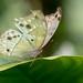 Zerbrechliche Schönheit - delicate beauty