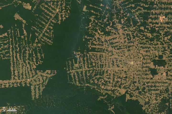 2010年衛星拍攝巴西亞馬遜地區森林濫伐。圖片來源:NASA