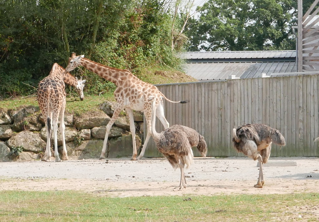 Parque de animales Branféré .. Vannes