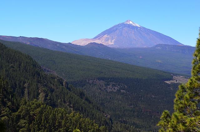 Pine forest La Orotava, Tenerife