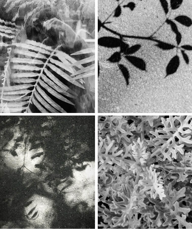 black and white collage of leaves
