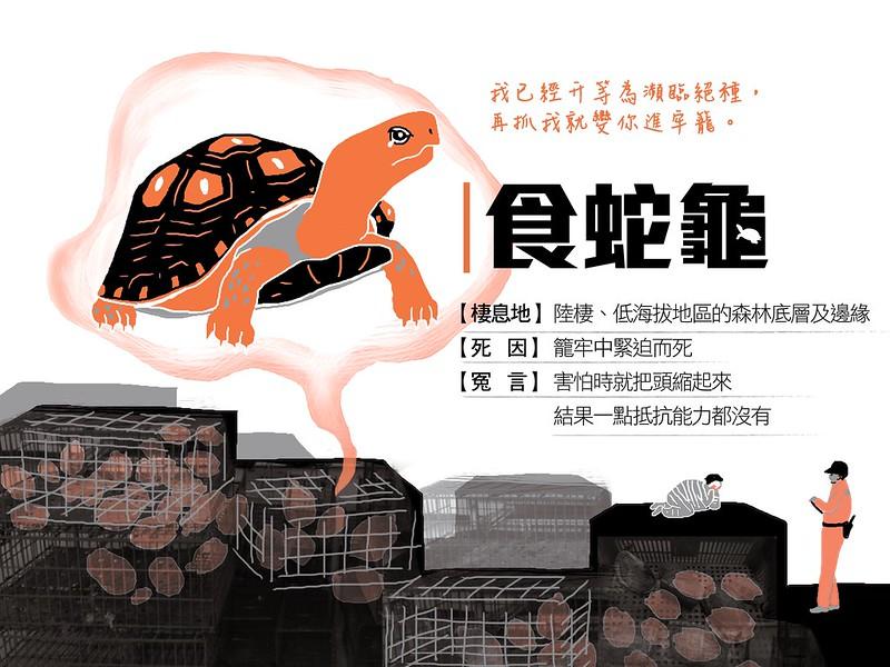 鬼月動物冤魂-食蛇龜