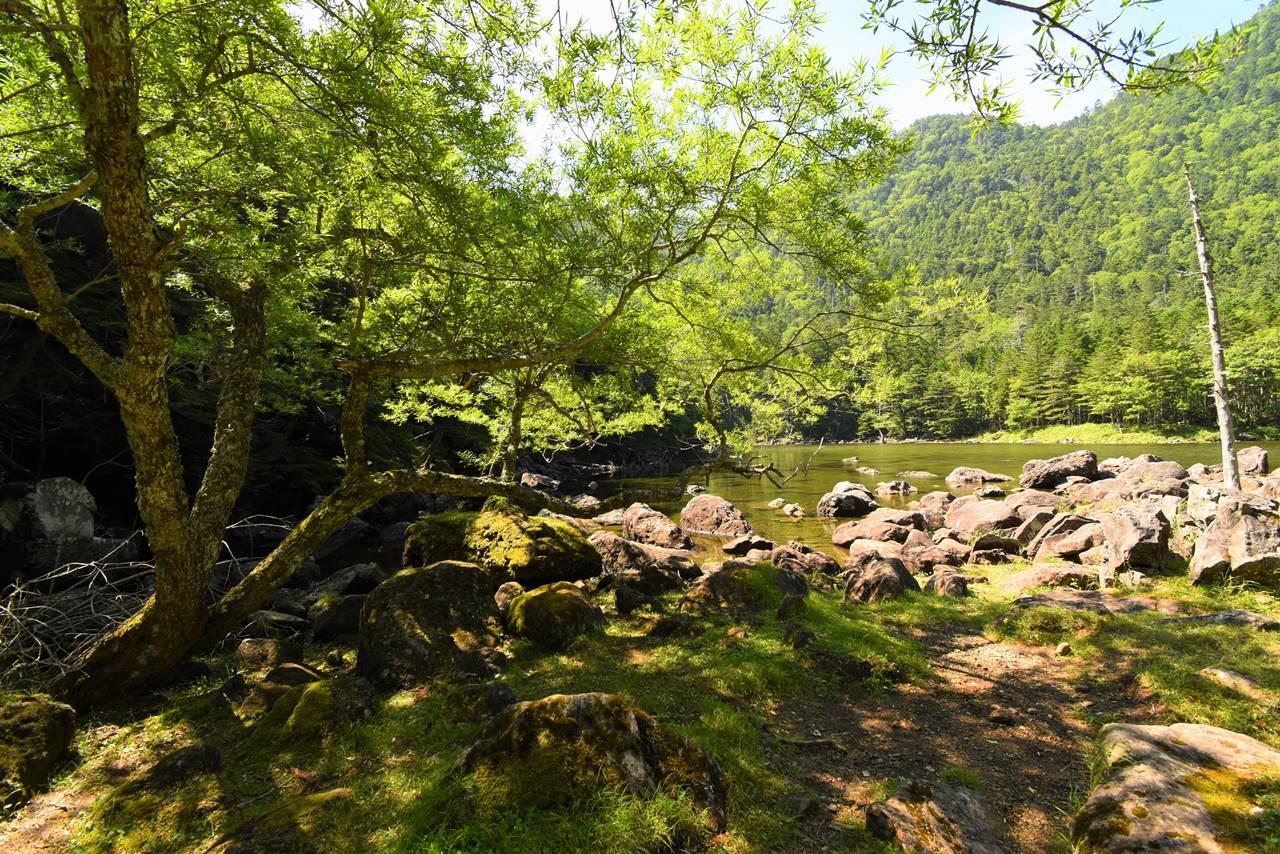 緑豊かな北八ヶ岳・亀甲池