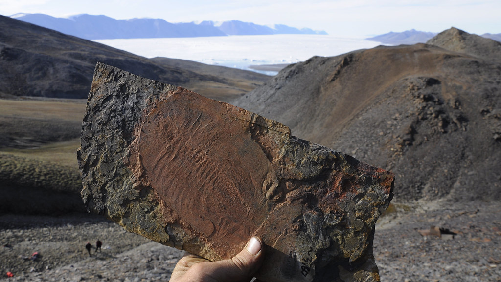 Hand holding a trilobite fossil in front of a mountain landscape in Greenland