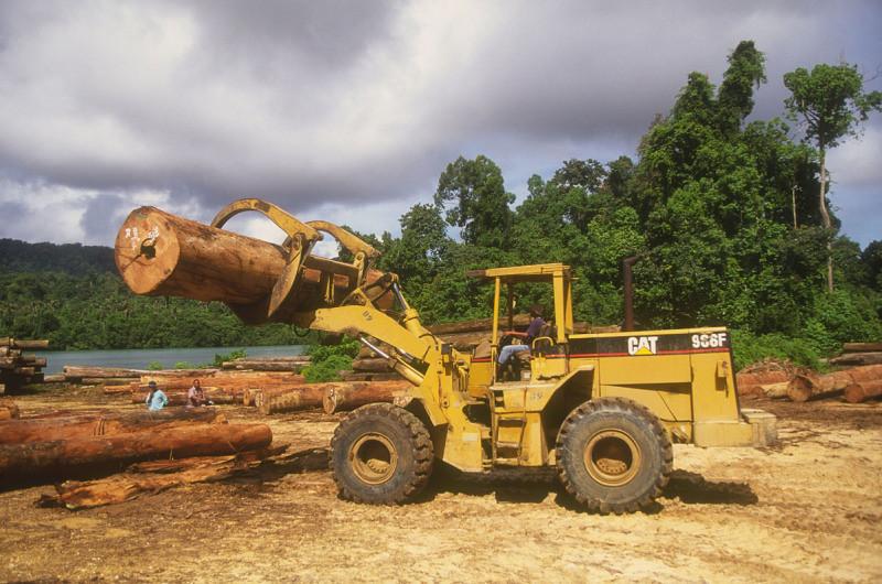 印尼東加里曼丹省三馬林達(Samarinda)的森林伐木活動。圖片來源:Edward Parker/WWF