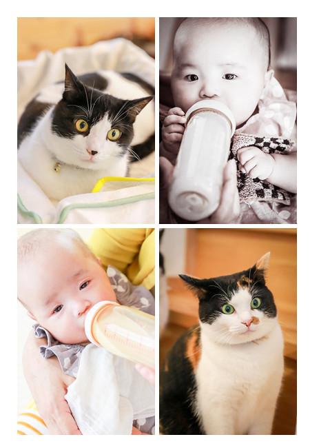 哺乳瓶でミルクを飲む赤ちゃん、ネコ