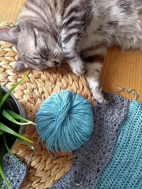 Tango, gato Siamés Tabby de colita corta esterilizado muy guapo, nacido en Enero´16, en adopción. Valencia. ADOPTADO. 30811980678_8008110b93_z