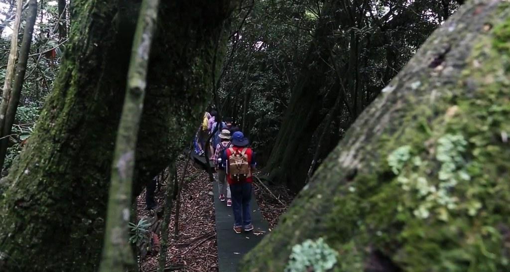 新佳陽黑森林步道