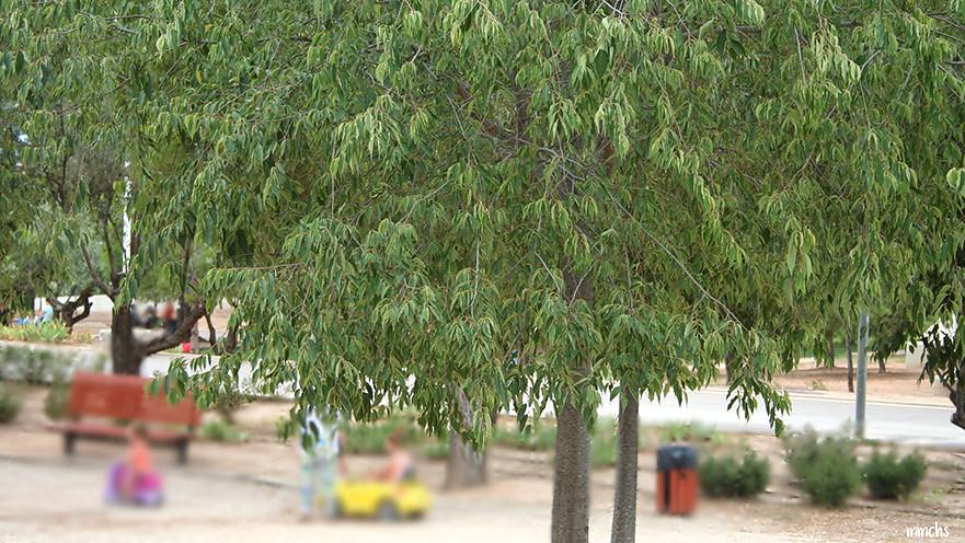 árboles del parque tiro de pichón de Paterna