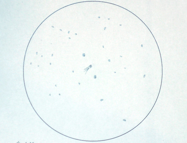 VCSE - A 21P/Giacobinni-Zinner üstökös 2018. augusztus 13-án 01:58 UT-kor - Román Dávid rajza 130/650-es Newton távcsővel készült. Az üstökös a két fényes csillag között látszik, kicsi csóvával. A két fényes csillag a BD +65° 228 és BD +65° 230 valószínűleg.