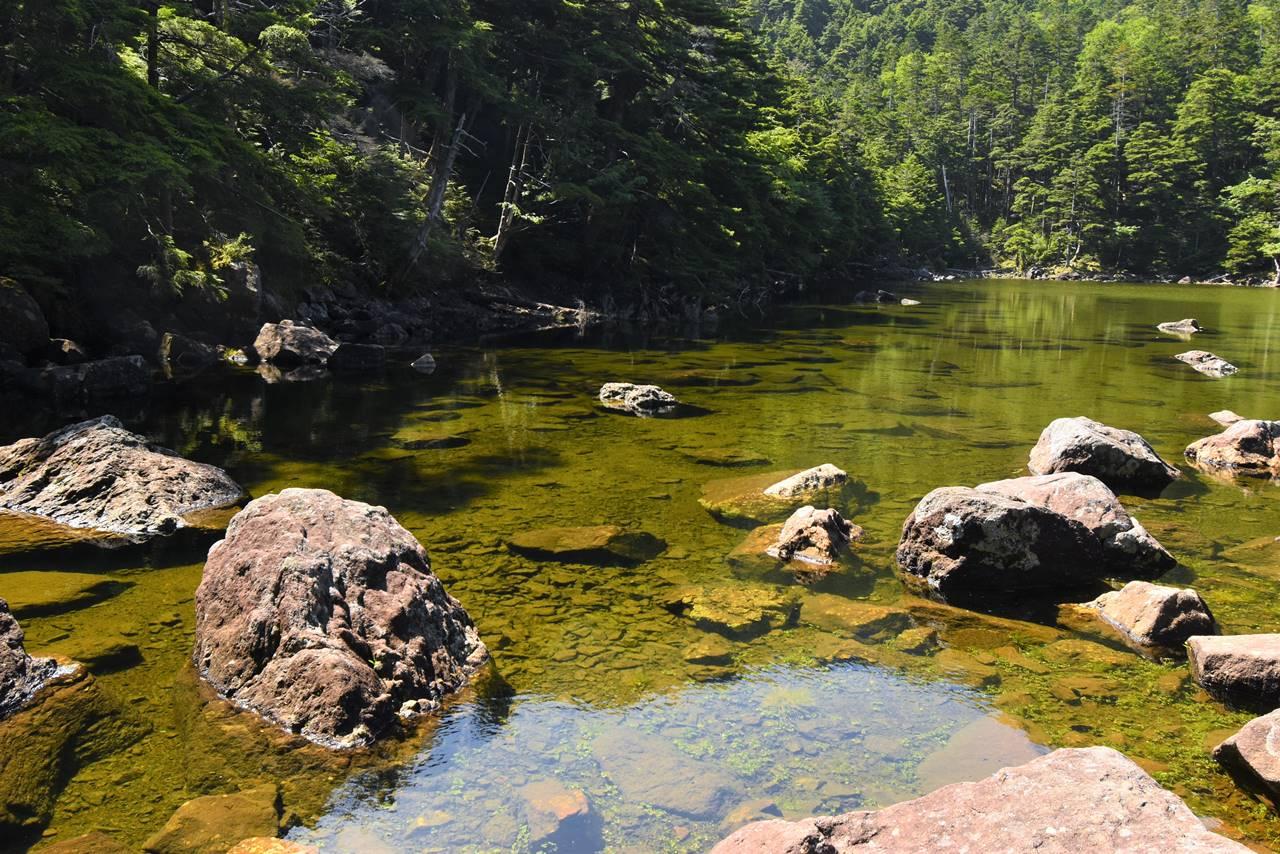 亀甲池の透き通った水