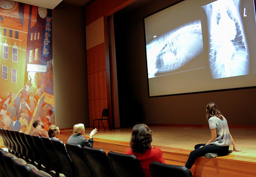 Auburn Auburn veterinary radiology students view radiographs on a large screen.