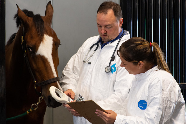 APHIS veterinarians taking the temperature of a horse during an inspection