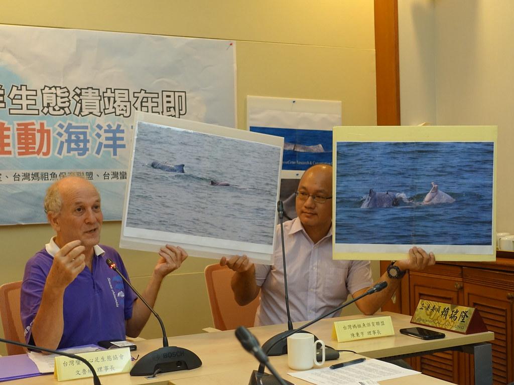 環團以白海豚母子對受傷、遭漁網纏繞的照片,呼籲盡快完成海基法,展開積極海洋保護