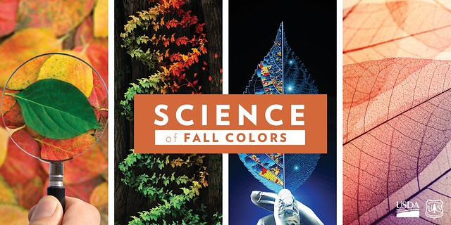 Science of Fall Colors graphic