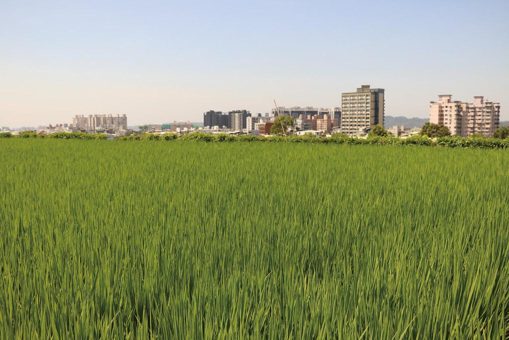 竹東地區的優良農地,緊鄰著新竹都會邊緣,正受到竹科三期都市計畫的威脅。