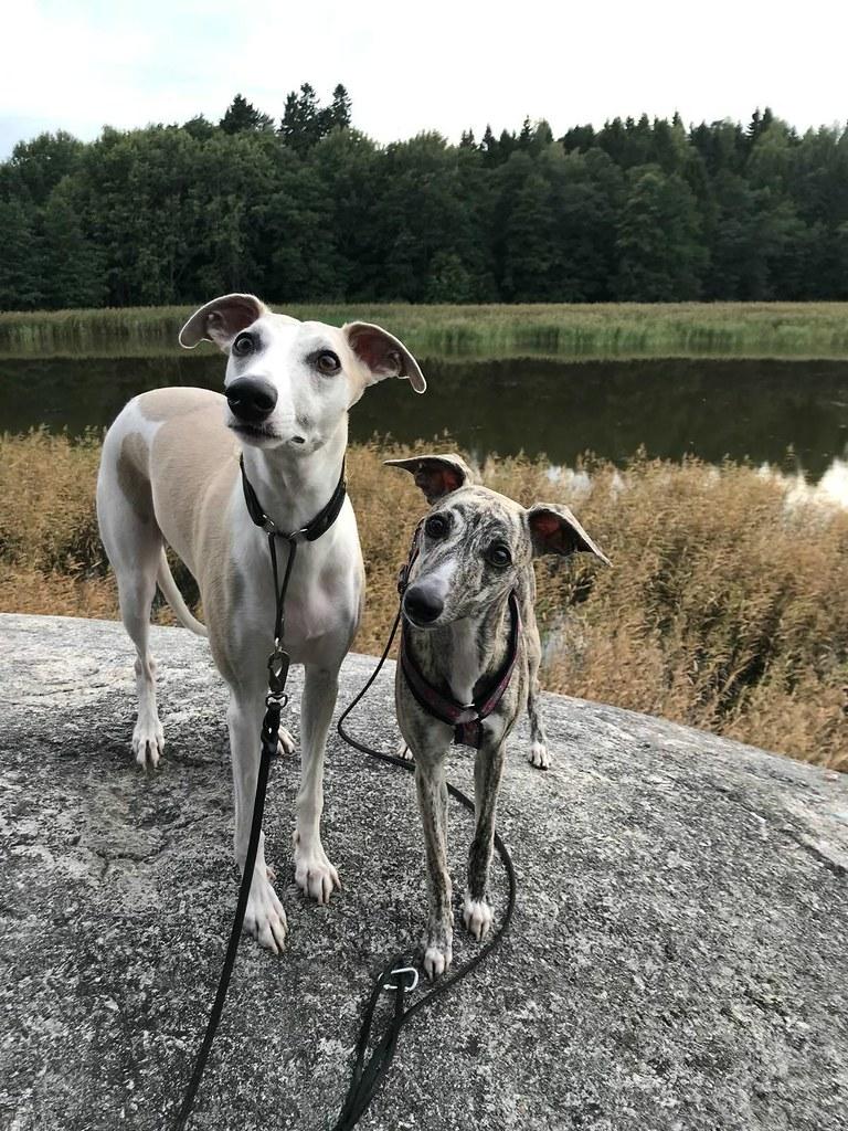 Gaia und ihr Freund Pronto